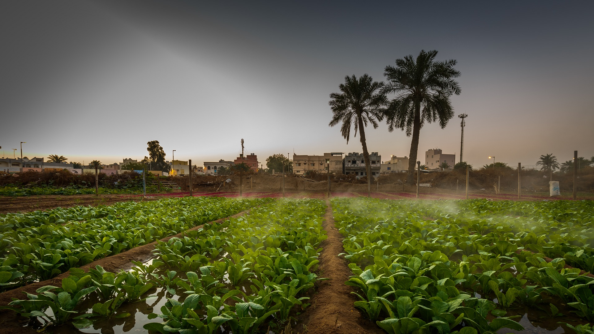 Challenges to Food Security in Bahrain